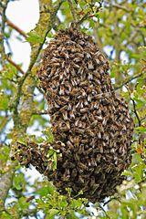Guardian Bees