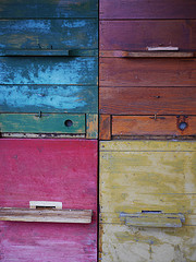 Bee live here