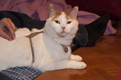 Cat Chain