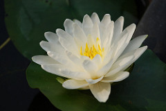Within the Lotus, Enlightenment