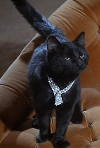 Tuesday Magic Item – Collar of the Clever Cat
