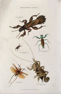 Insects of several types
