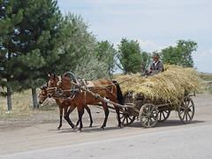 Hay Hay Now