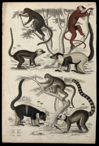Seven of Lemurs