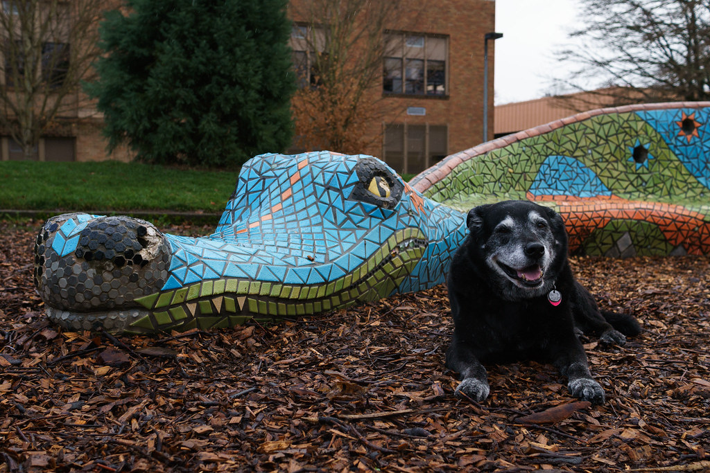 Dogs and Dragons (A to Z)