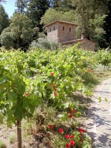 Vineyards too.